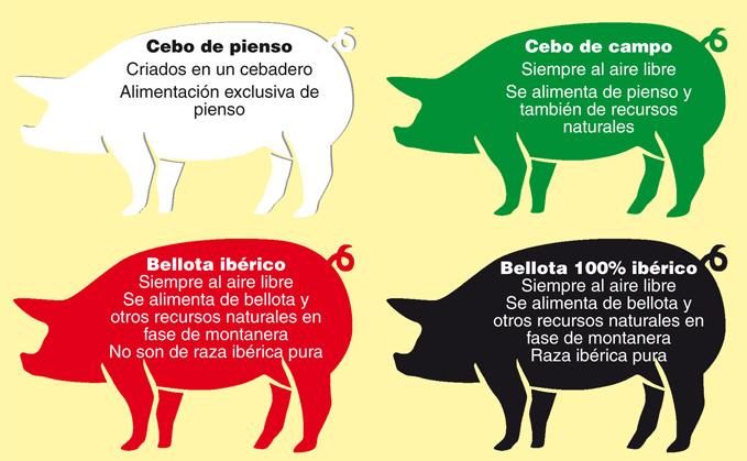 cerdos ibericos calidades